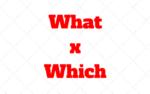 What y Which: Cómo y cuando utilizar en Inglés para Formular Preguntas